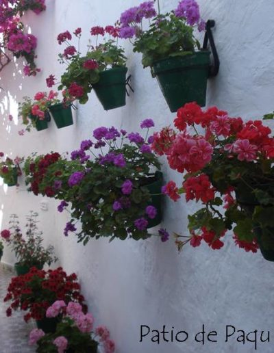 Patios y Balcones Campeños 24