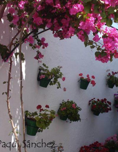 Patios y Balcones Campeños 25